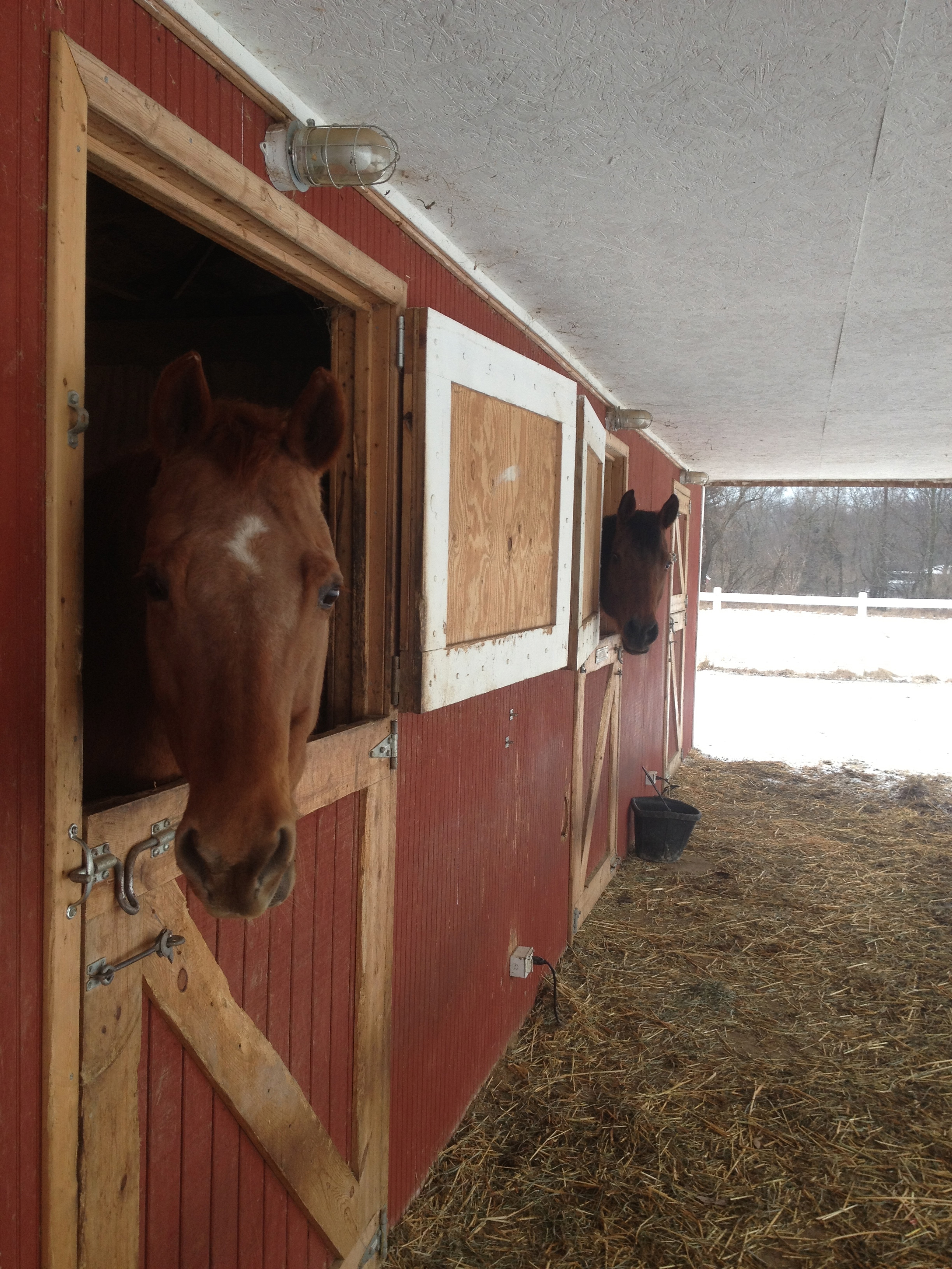 Tully and Drifter say good morning.